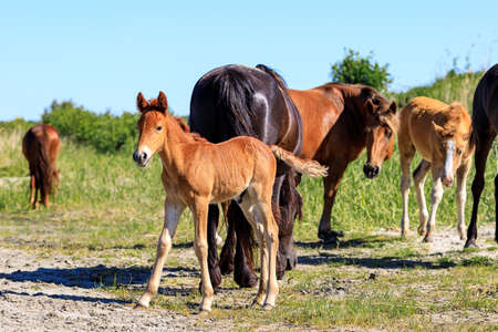 foal on the background of a herd of horses on a hot summer day under the bright sun. young foal looking into the distance