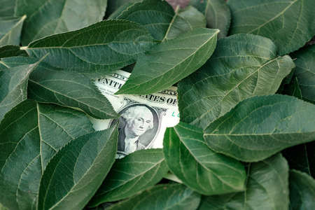 there is one dollar among the green leaves of the tree. ecology and finance