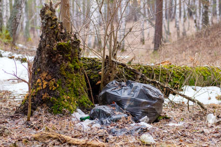discarded garbage in the forest by a tree that has rotted. the problem of environmental pollution by human 免版税图像