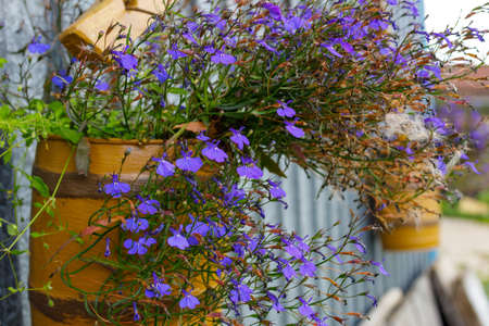 installation for home decoration, flowers in old wooden barrels