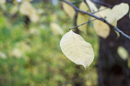 yellow leaf on a branch background highly blurred selective focus. beauty of the autumn forest