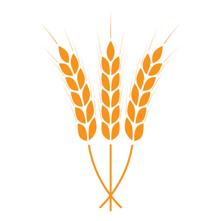 Wheat ears icon or sign. Crop or agricultural symbol isolated on white background. Design element for bread packaging or beer label. Vector illustration.