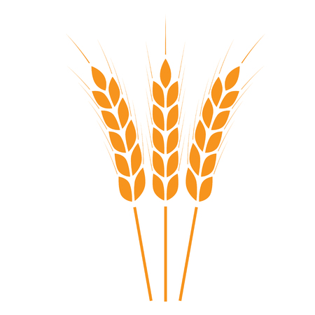 Wheat ears icon or sign. Crop symbol on white background. Design element for bread packaging or beer label. Vector illustration.