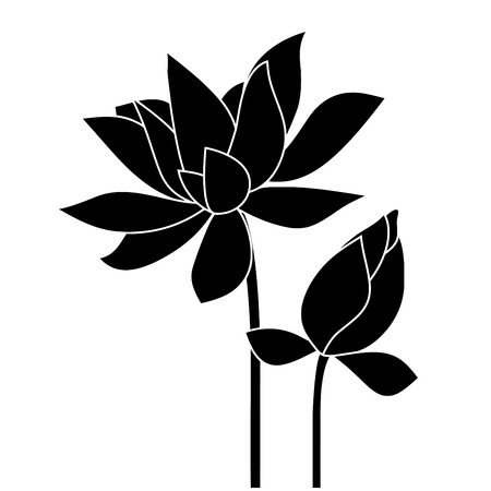 Lotus, water lily. Vector flower.