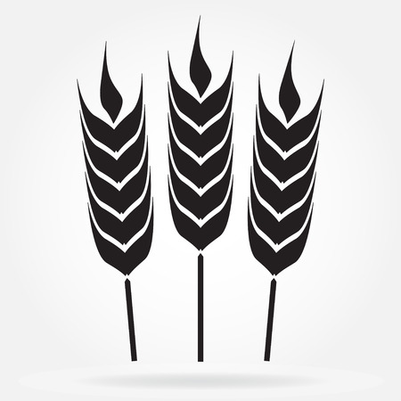 Wheat ears or rice icon. Agricultural symbol isolated on white background.