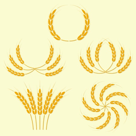 grain fields: Wheat ears or rice icons set. Illustration