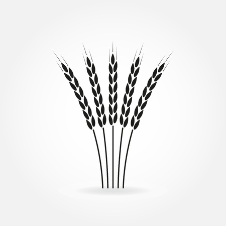 Wheat ears or rice icon. Crop, barley or rye symbol. Design element for beer label or bread packaging.
