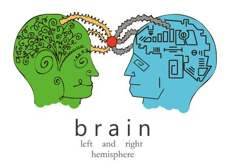 左右の人間の脳。ベクトルイラストレーション。  イラスト・ベクター素材