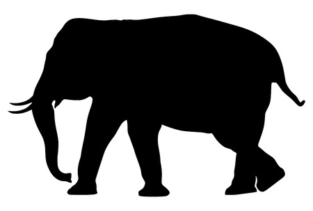 Elephant male vector silhouette illustration isolated on white background.
