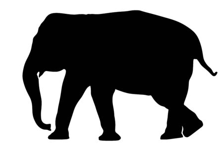 Elephant female vector silhouette illustration isolated on white background. African animal, big five member. Fangs, alert of poacher. Elephant silhouette. Safari attraction.
