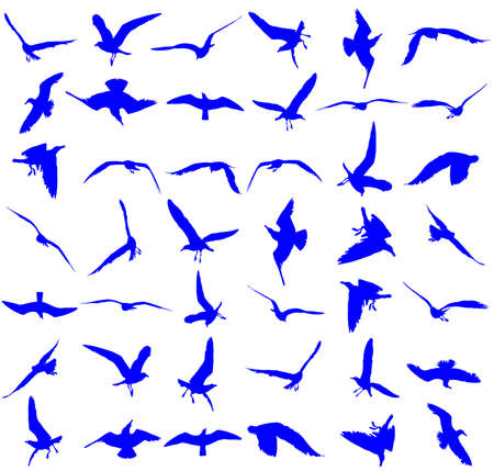 Collection of seagull fly on sky  vector silhouette illustration isolated on white background, sea or ocean bird with spread wings. Bird gull  fly silhouette.