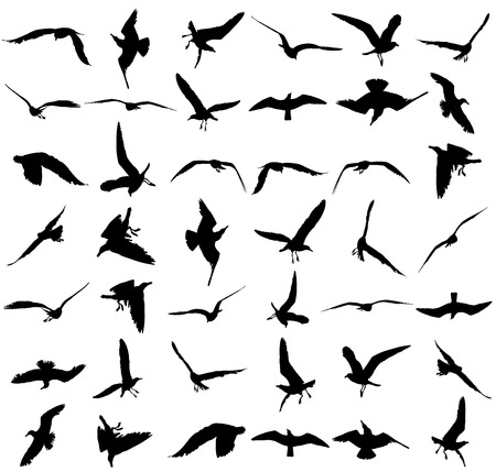 Vector set - seagull silhouette on white background, wings spread. Vettoriali