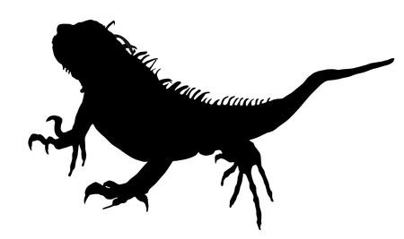 herpetology: Iguana vector silhouette illustration isolated on white background.