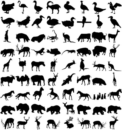 Vector Big Set of Animals Silhouettes. Mammals, Reptiles, Amphibia, Birds, Bats and other. Zoo animals collection - vector silhouette. Illustration
