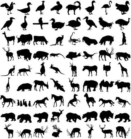 Vector big set of animals silhouettes on white background, vector illustration. Illustration