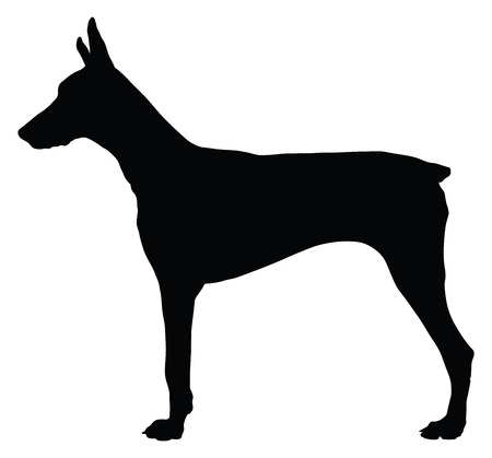 pincher: Doberman pinscher. Dog, flat icon. Isolated on white background, vector silhouette illustration.