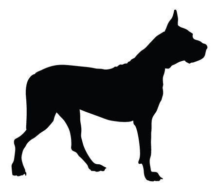 calm down: Dogo Argentino - Argentine Mastiff - purebred dog standing in side view - vector silhouette isolated. the Argentine, great Dane, Mastiff, the dog.