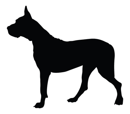 Dogo Argentino - Argentine Mastiff - purebred dog standing in side view - vector silhouette isolated. the Argentine, great Dane, Mastiff, the dog.