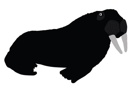 walrus: Walrus vector silhouette illustration isolated on white background. Walrus cow on ice flow. Illustration