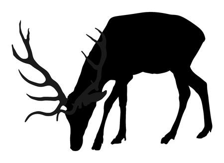 Illustratie van het herten de vectorsilhouet, op witte achtergrond wordt geïsoleerd die. Silkaherten op witte achtergrond worden geïsoleerd die.