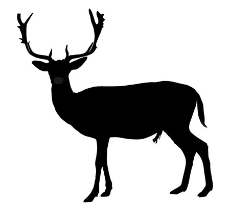 cervus: Deer vector silhouette illustration, isolated on white background. Silka deer isolated on white background.