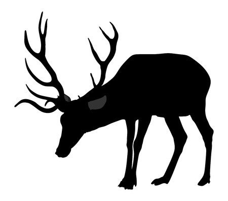 Deer vector silhouette illustration, isolated on white background. Silka deer isolated on white background.