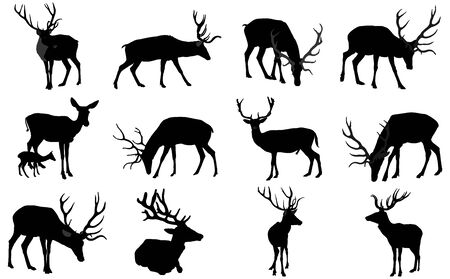 set of Deer family vector silhouette isolated on white background. Reindeer couple with fawn. Proud Noble Deer male in forest or zoo. Powerful buck with huge neck and antlers standing on alert looking.