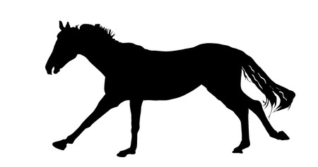 Horse silhouette, vector illustration , horse race, isolated on white background