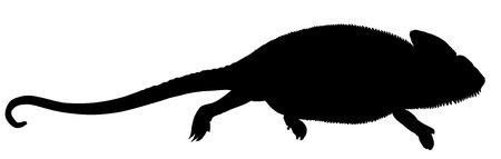 chamaeleo: Chameleon vector silhouette illustration isolated on white background.