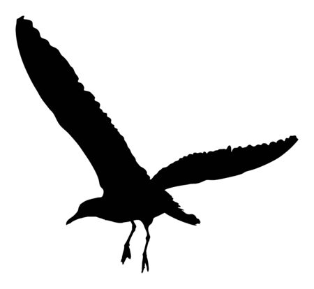 Seagull fly vector silhouette on white background, wings spread. Bird fly silhouette. Freedom symbol of liberty. Fish hunter flying.