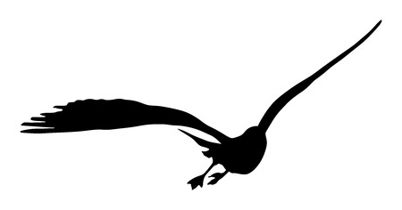 Seagull fly vector silhouette on white background, wings spread.