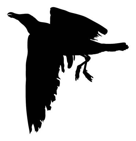 webbed: Seagull fly vector silhouette on white background, wings spread.