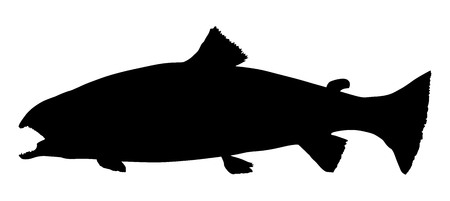 Trout fish vector silhouette. Oncorhynchus mykiss isolated over white background.