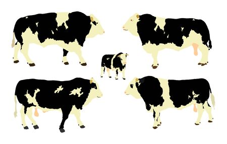 Standing adult bull vector illustration isolated on white background. Holstein Friesian cow. Breeding bull.  quality genetic material for insemination.  イラスト・ベクター素材