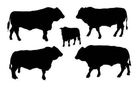 흰색 배경에 고립 된 성인 황소 벡터 실루엣 그림 서. 버팔로, 황소 그룹 컬렉션.