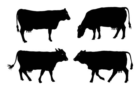 Group of Cow vector silhouette illustration. Cow grazing. Milk and cheese fabric. Farm animal.