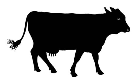 Cow vector silhouette illustration isolated on white background. Cow grazing. Milk and cheese fabric. Farm animal.