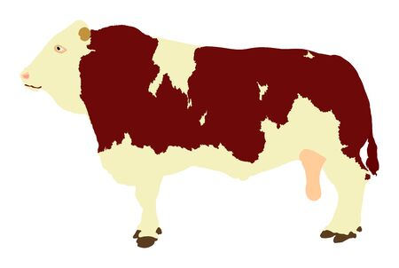 Standing adult bull vector illustration isolated on white background. Simmentaler Fleckvieh. Simmental cow. Breeding bull.  quality genetic material for insemination.