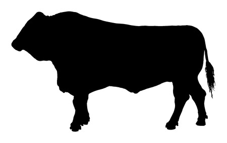Standing adult bull silhouette illustration isolated on white background.