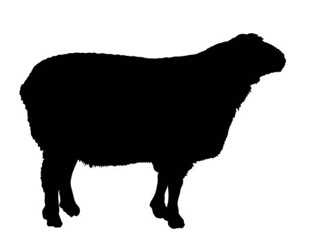 Sheep vector silhouette illustration. Lamb meat. Butcher shop template for craft food packaging or restaurant design.