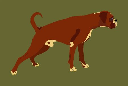 Portrait of Boxer dog vector illustration isolated. Beware of dog. Beware of purebred dog. Dog show champion. Best friend. Alert, guard attention. 向量圖像