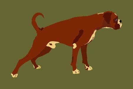 Portrait of Boxer dog vector illustration isolated. Beware of dog. Beware of purebred dog. Dog show champion. Best friend. Alert, guard attention. Illustration