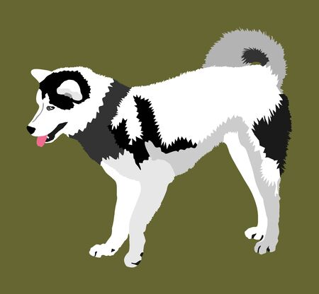 Siberian Husky dog vector illustration. Akita Inu breed. Working dog. Beware of purebred dog. Dog show champion. Best friend. Alert, guard attention.