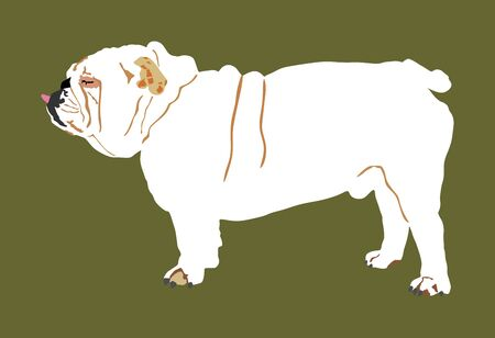 Portrait of English Bulldog vector illustration isolated. Beware of dog.