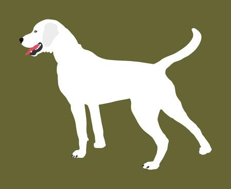 Portrait of Labrador Retriever vector illustration dog. Illustration