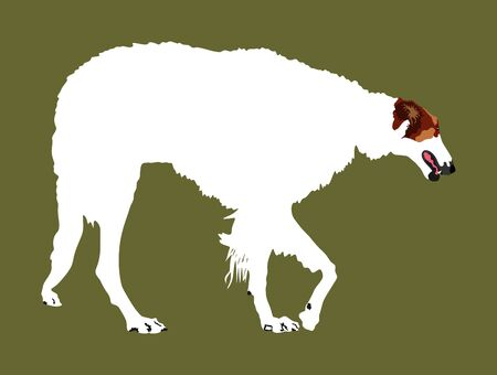 Portrait of Russian Wolfhound dog vector illustration isolated. Borzoi Russian Hunting. Sighthound, Russkaya Psovaya Borzaya. Noble Psovoi. Black dog silhouette.