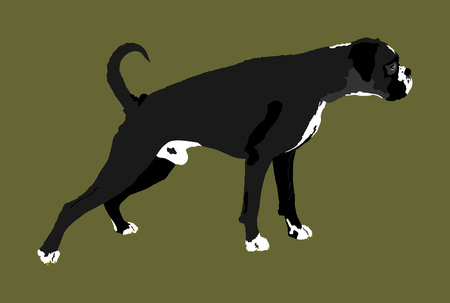 Portrait of Boxer dog vector illustration isolated.