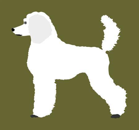 Portrait of Royal Poodle vector illustration isolated. French black poodle walking. Beware of dog. Ilustração