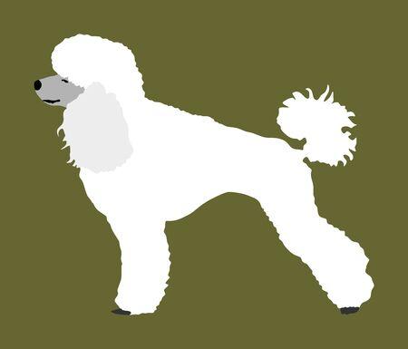 Toy Poodle vector. Portrait of Royal Poodle vector silhouette illustration isolated. French black poodle standing. Beware of dog. Ilustração