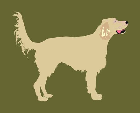 Portrait of Golden Retriever vector illustration isolated. Beware of dog. Friendly family dog.